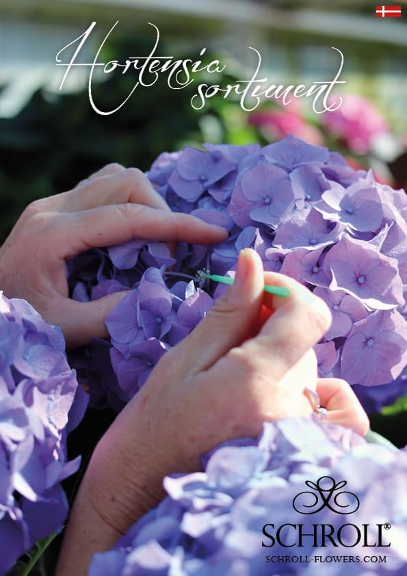 forside katalog 2020 hortensia sortiment