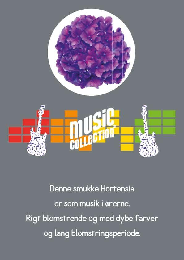 En lilla Hortensia, to guitar og tekst om katalogen