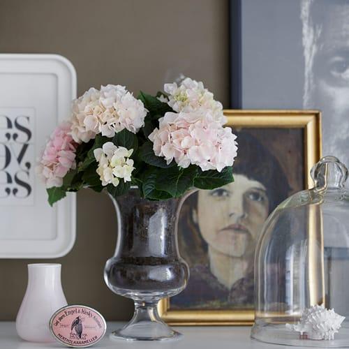 Pink Hortensia i gennemsigtig vase