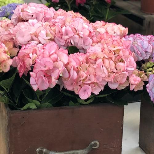 Dekorations billede af en pink blomst i en brun kasse