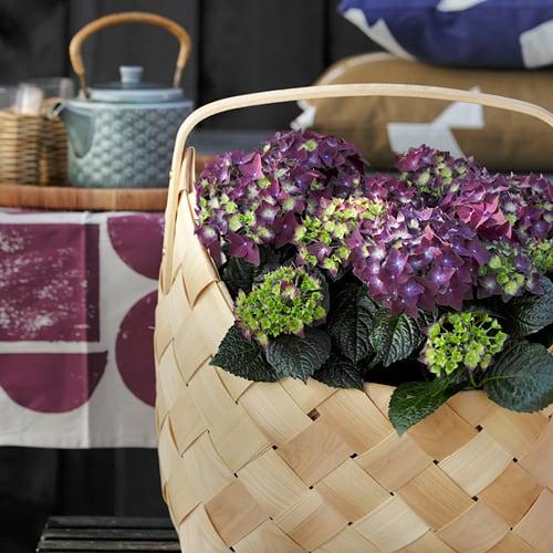 Dekorations billede af en lilla Hortensia i en fletkurv
