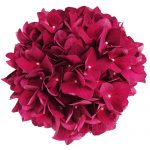 Roed Hortensia blomsterhovede, Red Romance