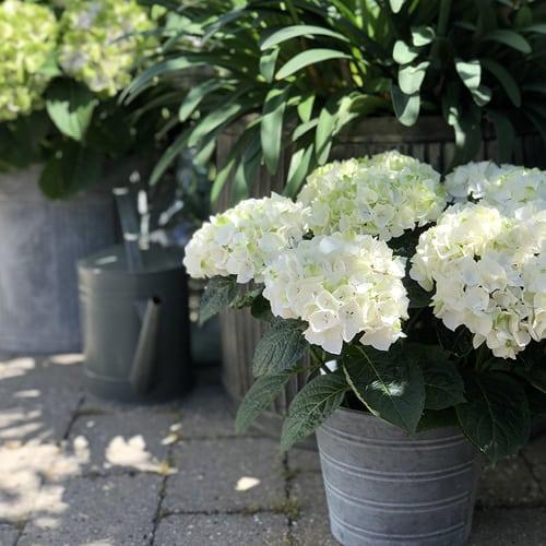 Dekoration billede af en hvid blomst